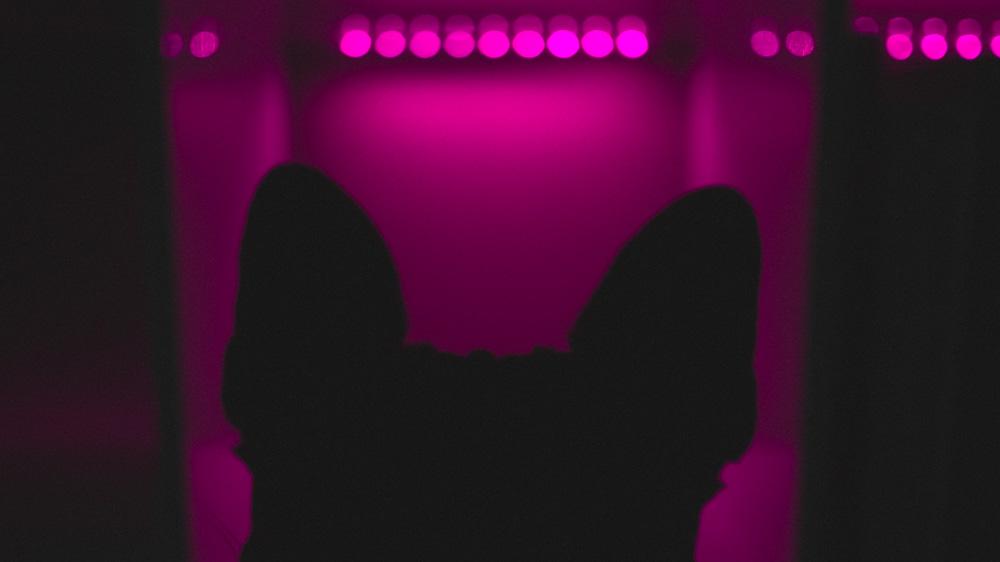Colette Neon Silhouette Photo 02