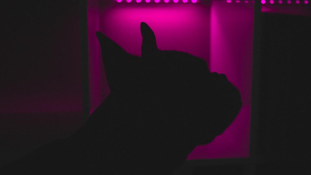 Colette Neon Silhouette Photo 01